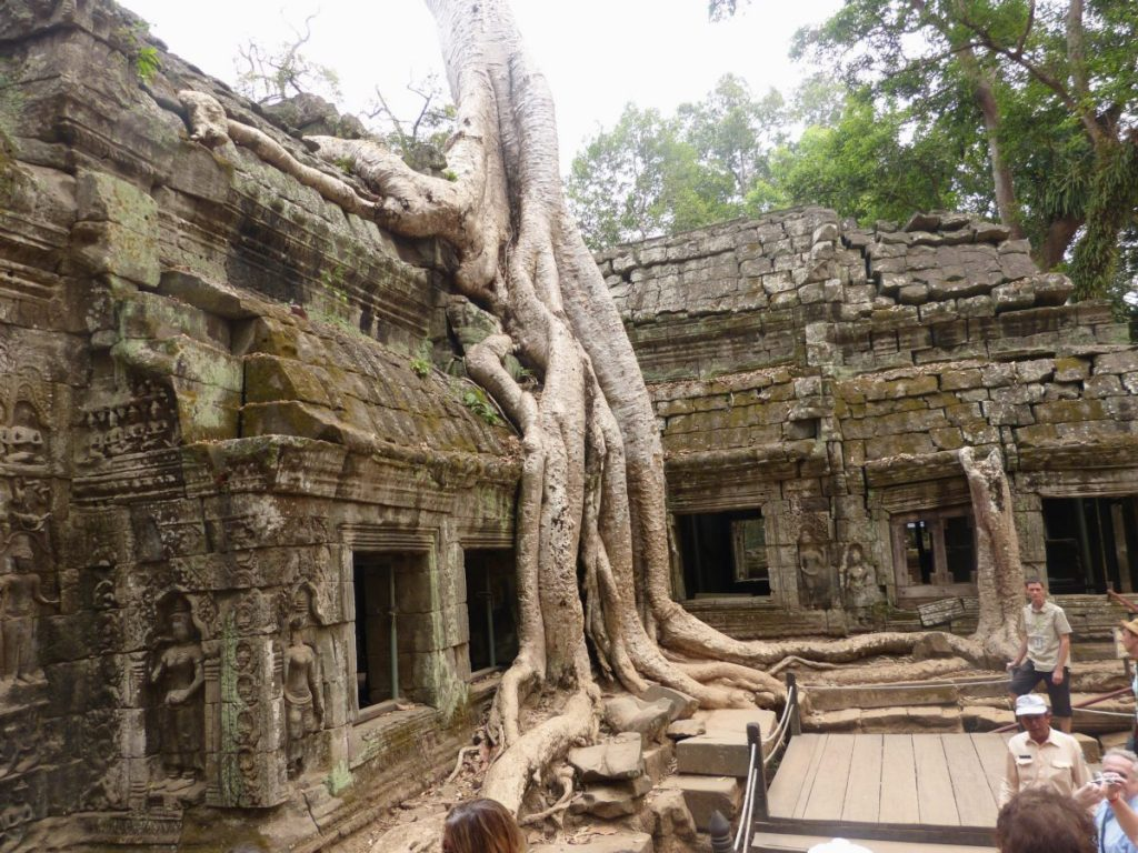 Der Tempel Ta Prohm in Angkor Wat in Kambodscha