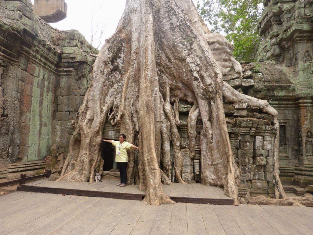 Der Tempel Ta Prohm in Ankor in Kambodscha