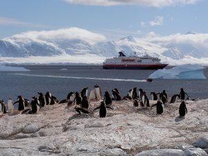Pinguinkolonie Antarktis