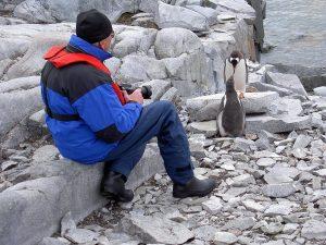 Pinguine antarktis