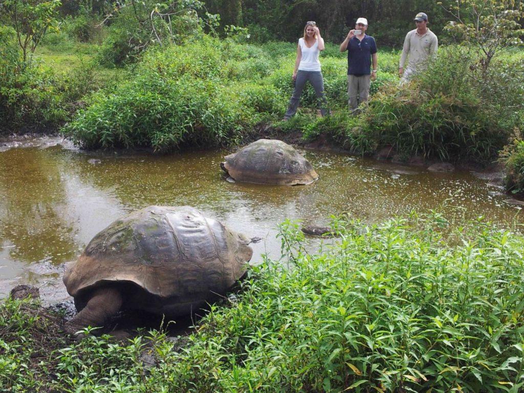 Galapagos-Riesenschildkröten, Ecuador