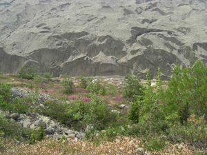 Moränenlandschaft im Wrangell-St. Eilas Nationalpark.