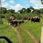 "der Tarangire Nationalpark, Teil des ""Northern Circuit"" in Tansania"