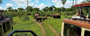 "der Tarangire Nationalpark, Teil des ""Northern Circuit"" in Tansania"