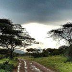 Abendstimmung in der Serengeti