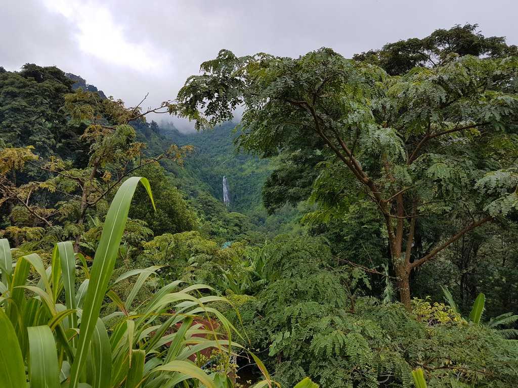 Regenwald am Fuß des Kilimandscharo, Tansania