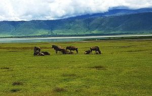 Tierherde im Ngorongoro-Krater, Tansania