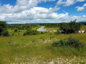 Blick auf den Tarangire-River im gleichnamigen Nationalpark in Tansania.