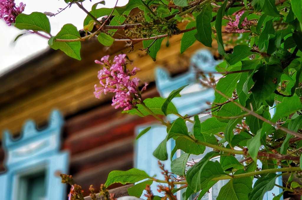 Holzhaus in Listwjanka am Baikalsee in Sibirien