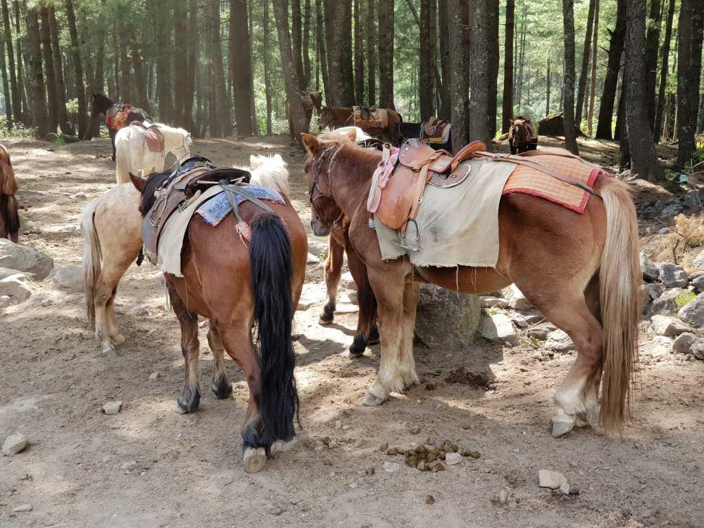 Pferde auf dem Weg zum Tigernest-Kloster oberhalb des Paro-Tales in Bhutan