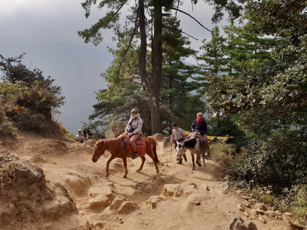 Pferde auf dem Weg zum Tigernest-Kloster oberhalb des Part-Tales in Bhutan.