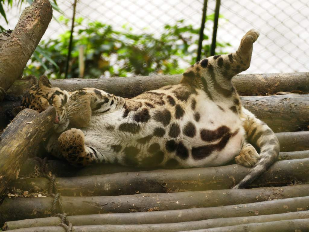 Tiere im Im Padmaja Naidu Himalayan Zoological Park