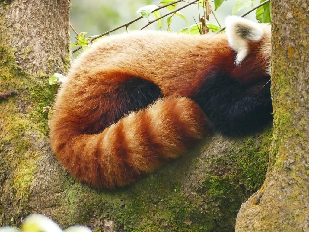 Im Padmaja Naidu Himalayan Zoological Park