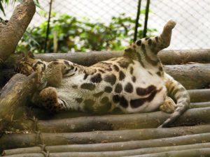 Tiere im Zoo von Darjeeling in Indien