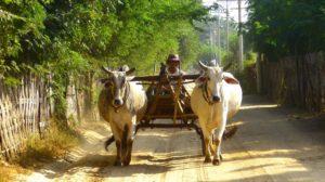 ein Ochsenkarren in einer ländlichen Gegend von Myanmar