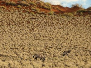 Fahrt zur Dünenlandschaft Sossusvlei in Namibia