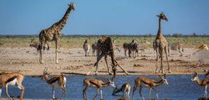 ein Wasserloch im Etosha-Nationalpark in Namibia