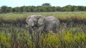 Elefanten im Etosha-Nationalpark in Namibia